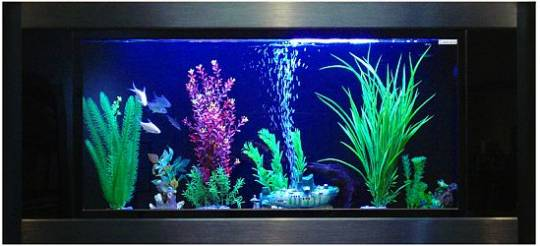 aquavista panoramic wall aquarium 2