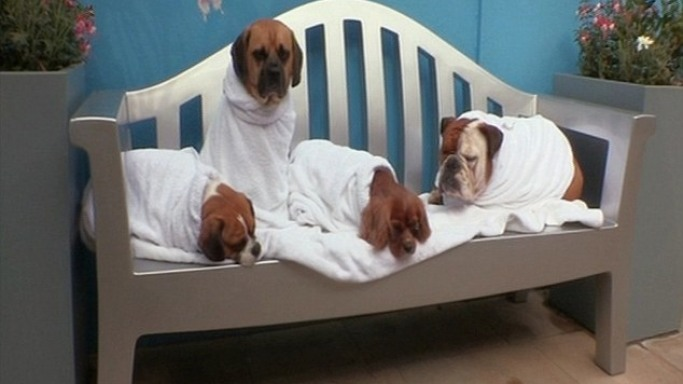 Pampered pooches